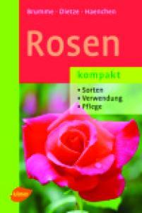 Rosen kompakt: Sorten, Verwendung, Pflege