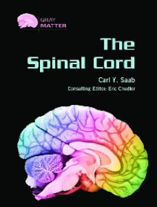 The Spinal Cord (Gray Matter)
